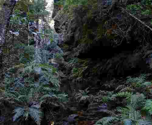 727px_rainforest_bluemountainsnsw